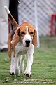 jabalpur-dog-show-2-nov-2014_63.jpg