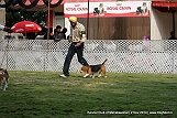 jabalpur-dog-show-2-nov-2014_71.jpg