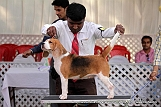 jabalpur-dog-show-2-nov-2014_75.jpg