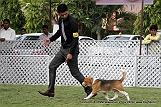 jabalpur-dog-show-2-nov-2014_84.jpg