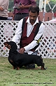 jabalpur-dog-show-2-nov-2014_92.jpg