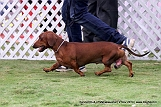 jabalpur-dog-show-2-nov-2014_97.jpg
