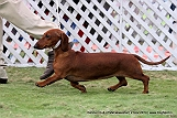 jabalpur-dog-show-2-nov-2014_99.jpg
