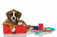 Are you prepared for a pet emergency? First Aid checklist