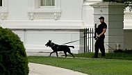 Ahead of President Obama's Visit, the Elite K9 Squad of US Secret Service Arrives as a Security Detail