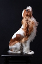 20 dog breeds with runway perfect hair
