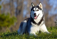 7 Most Healthy And The Most Fit Dog Breeds In The World!
