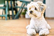 5 Lesser Known Facts About Small Dog Breeds That Every Pet Parent Must Know