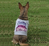 Touchdog Style Of Campus Winter T -Shirt - Medium